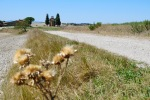 Val-d_Orcia-06_